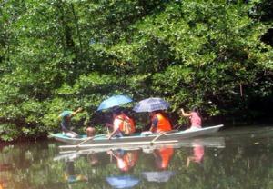 Mangrove Paddleboat Tour